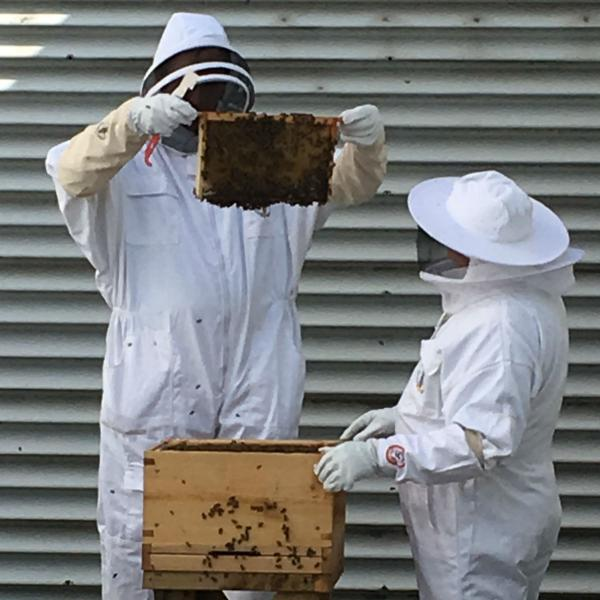 Bee keeping at Xscape Yorkshire